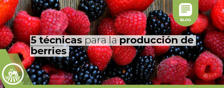 5 tecnicas para la produccion de berries