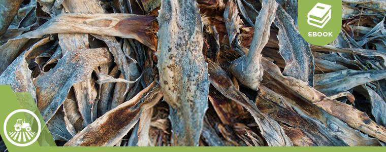 Cultivos de agave en mal estado