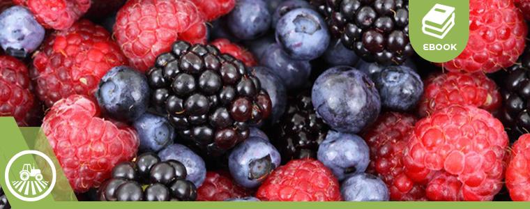 Cultivo de Berries