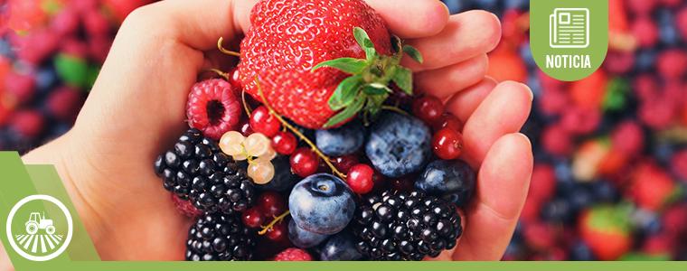 Productoras de berries