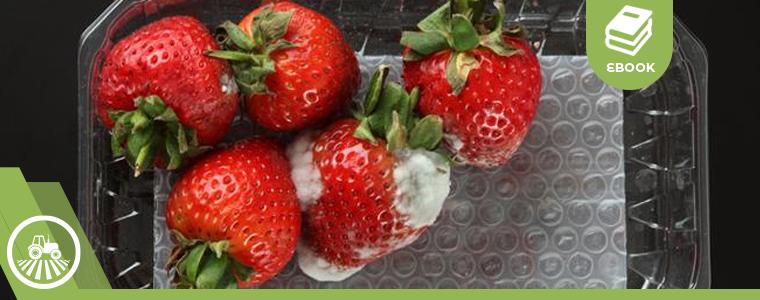 Frutas descompuestas.