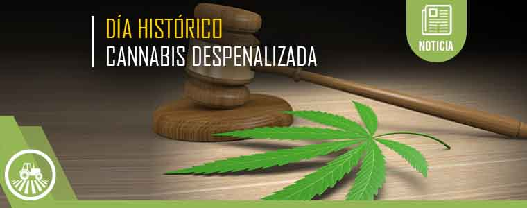 México aprueba el Cannabis para uso medicinal y consumo personal