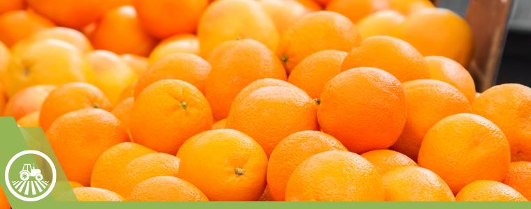 cerro de naranjas frescas
