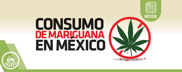 México es un potencial gigante en producción de marihuana legal