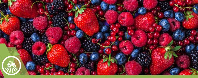 fresas-zarzamora-ceresas-berries