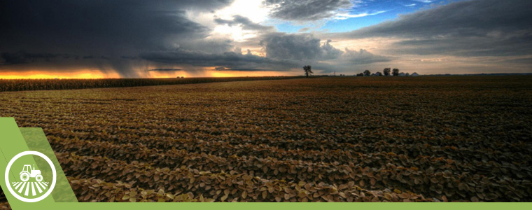Panoramica de campo de cultivo con amplio horizonte