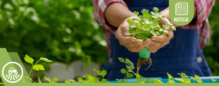 ¿Sabes qué se puede cultivar por hidroponía?