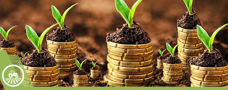 plantas semillas financiar