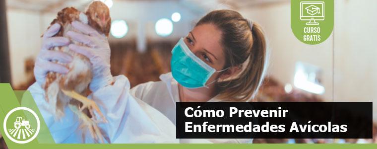 Cómo Prevenir Enfermedades Avícolas