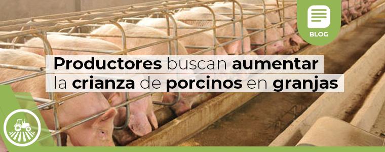 productores-buscan-aumentar-la-crianza-de-porcinos-en-granjas