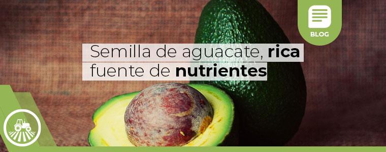 semilla-de-aguacate nutriente