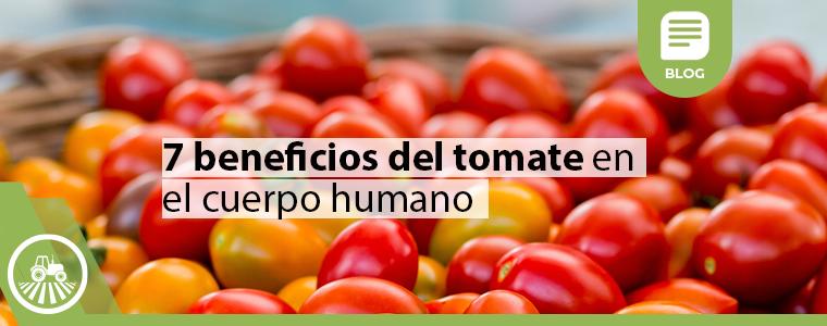 Tomates maduros en canasto